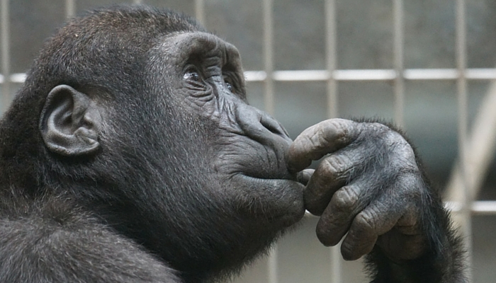 Thinking pic monkey 700 x 400 250116 1